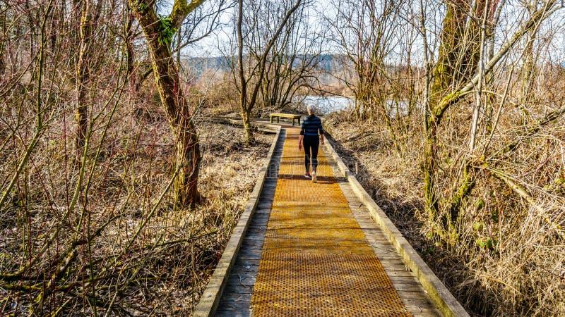 Hög kvinna som fotvandrar slingan från poppelstång till denbit stången i Glen Valley Regional Park nära fortet Langley, F. KR., K royaltyfri bild