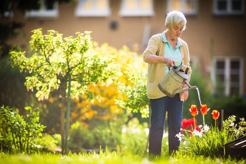Hög kvinna som gör något som arbeta i trädgården i hennes älskvärda trädgård royaltyfria foton