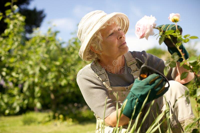 Hög kvinna som kontrollerar blommor i trädgård royaltyfria bilder