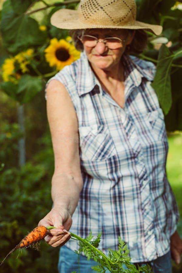 Hög kvinna som rymmer en skördad morot i hennes hand arkivbilder
