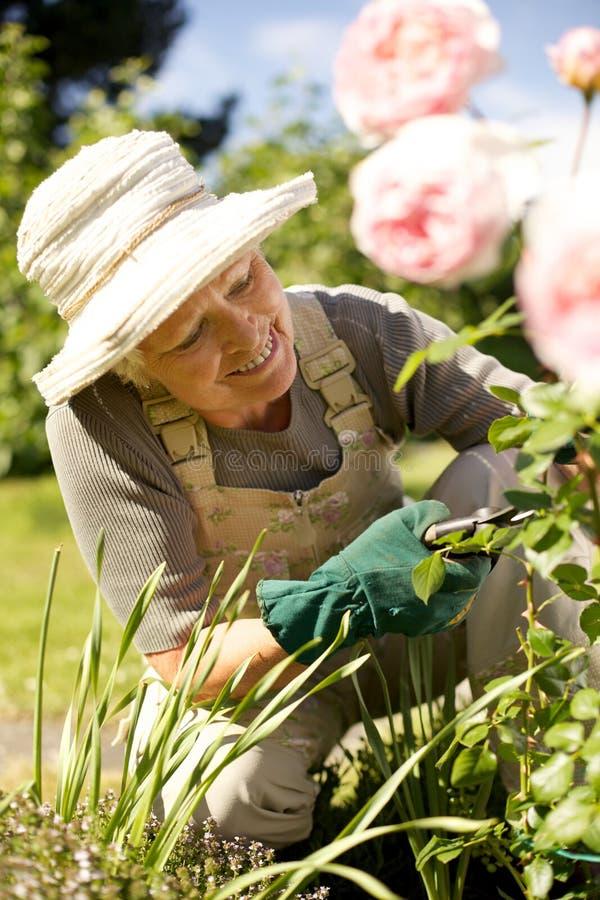 Hög kvinna som upp fixar hennes trädgård royaltyfri foto