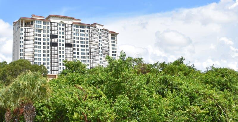 H?g l?nef?rh?jning i Naples Florida mangrovar arkivbilder