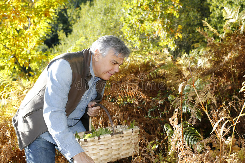 Hög man i skogsearchin för champinjoner arkivbilder