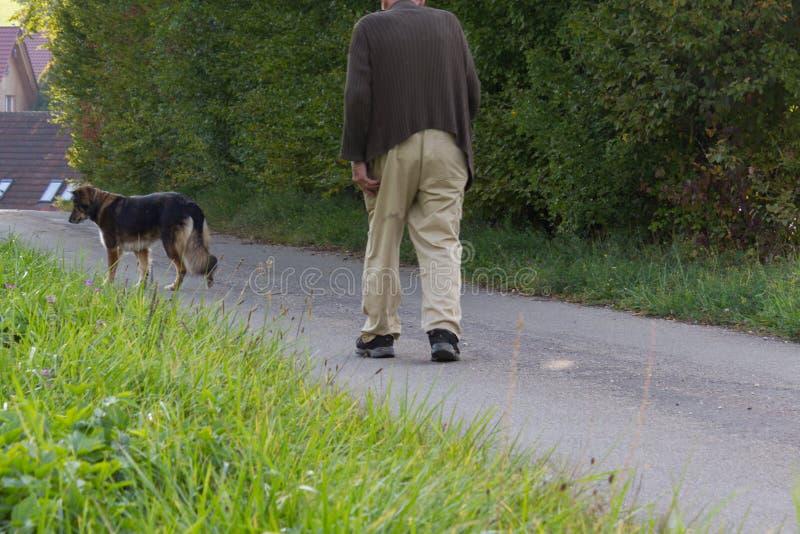 hög man med att gå hunden för pinne och för tysk herde beside arkivbilder