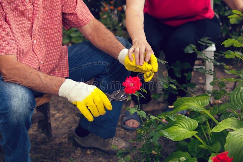 Hög man och kvinna som arbetar i trädgården arkivbild