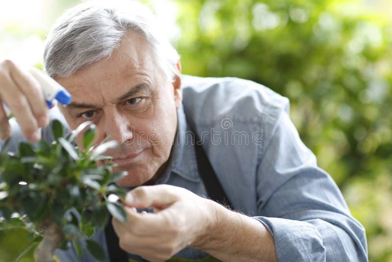 Hög man som bevattnar växter royaltyfri bild