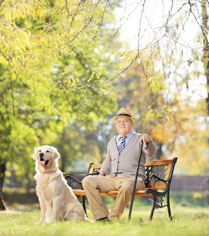 Hög man som placeras på en bänk med hans hund som kopplar av i en parkera arkivbild