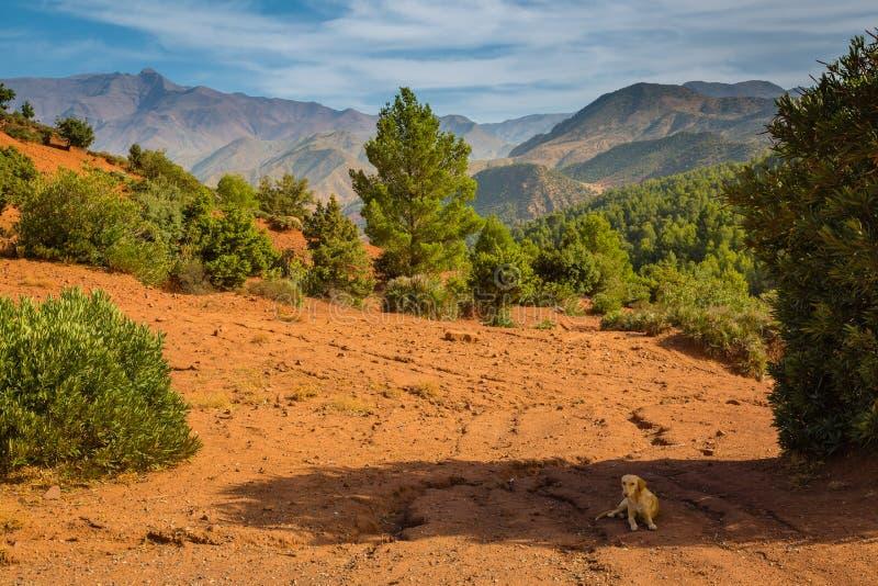 Hög platå i kartbokbergen, Marocko arkivbilder