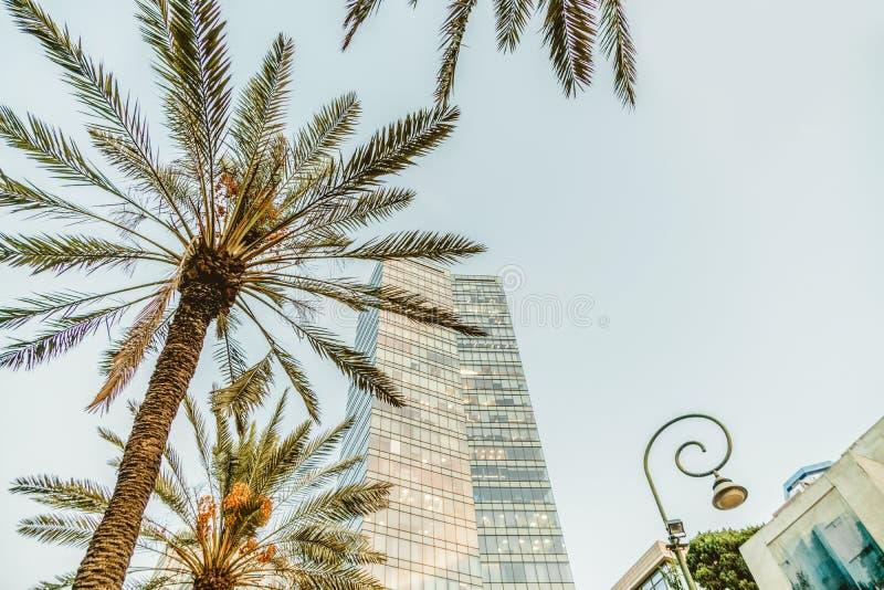 Hög stads- byggnad för israeliskt kontor i Tel Aviv Rothschild boulevard Loppstad och affärsmitt arkivbilder