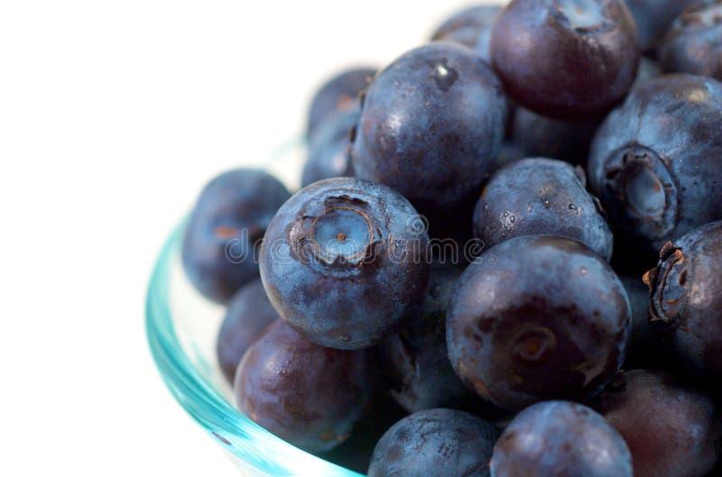 hög tangent för blåbär royaltyfri foto