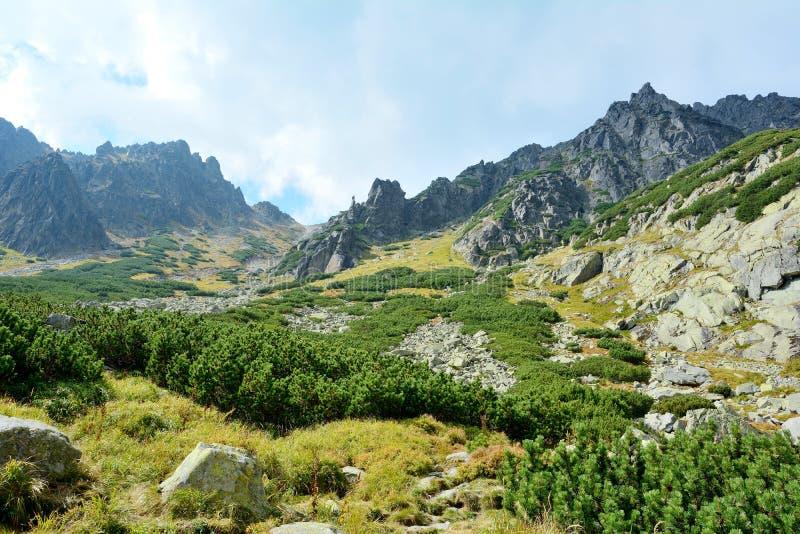 Hög Tatras natur arkivfoto