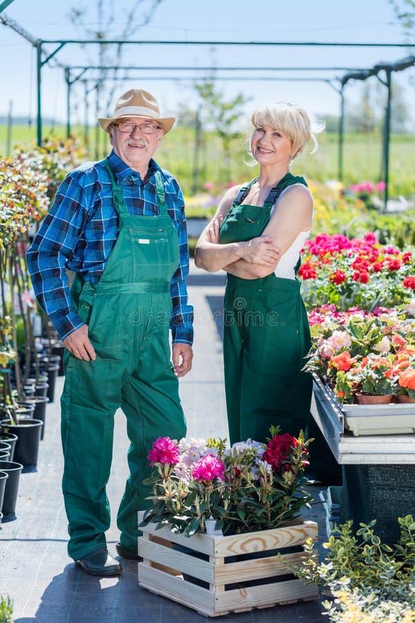 Hög trädgårdsmästare och medelålders trädgårdsmästare på arbete royaltyfria foton