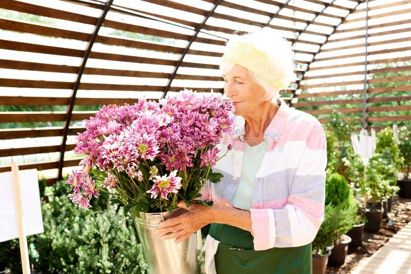 Hög trädgårdsmästare Smelling Flowers royaltyfria bilder