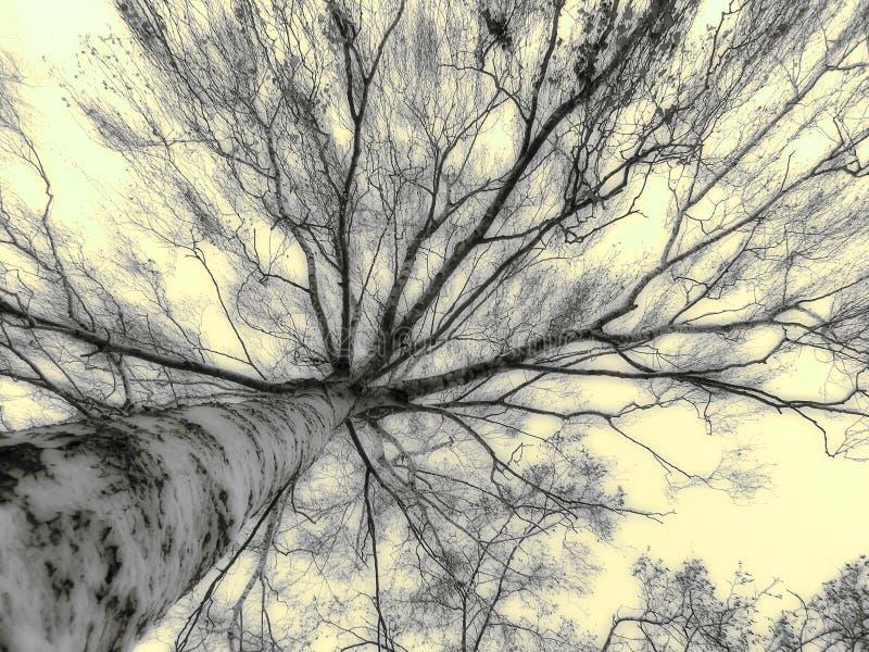hög tree arkivfoto