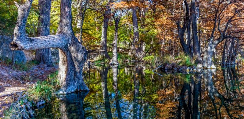 Hög upplösningspanoramautsikt av jätte- cypressträd i Texas royaltyfri foto