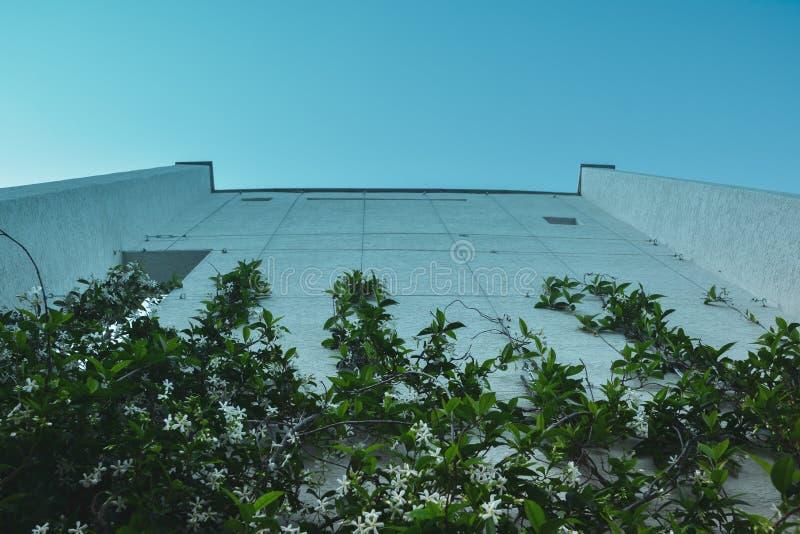 Hög vägg med klättringväxter mot den blåa himlen royaltyfria foton