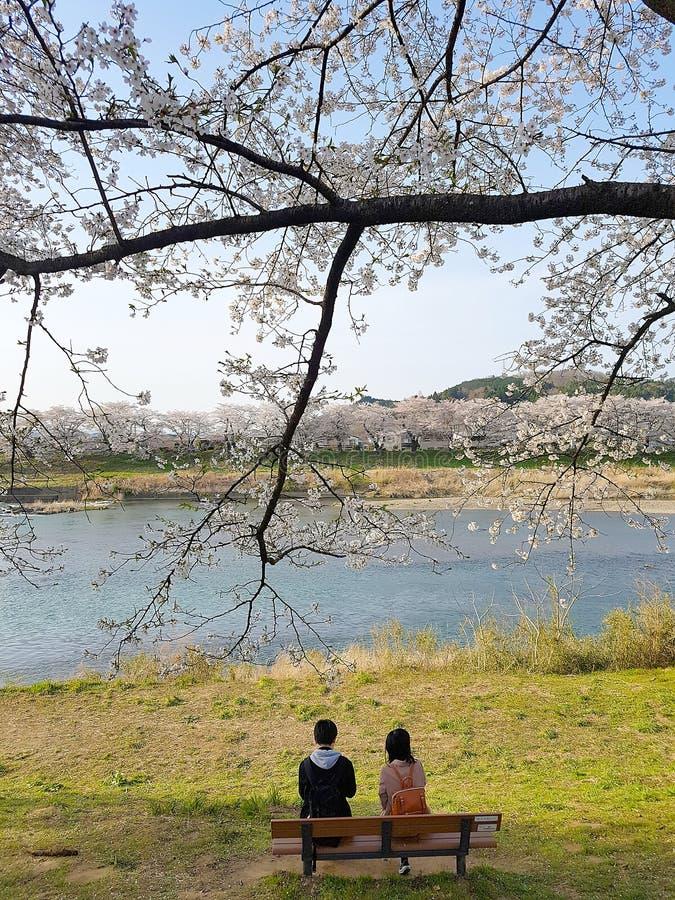 Höga asiatiska par som tillsammans vilar under det sakura trädet i Japan fotografering för bildbyråer