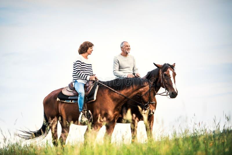 Höga hästar för en parridning i natur arkivbild