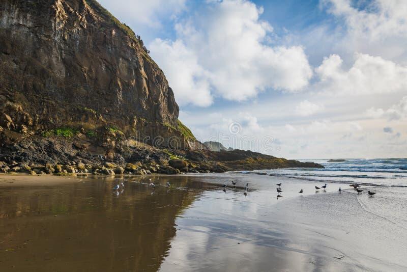 Höga ojämna klippor, seagulls, blå himmel och pösiga vita moln reflekterade i de våta sanderna av en strand längs den Oregon kust royaltyfria bilder