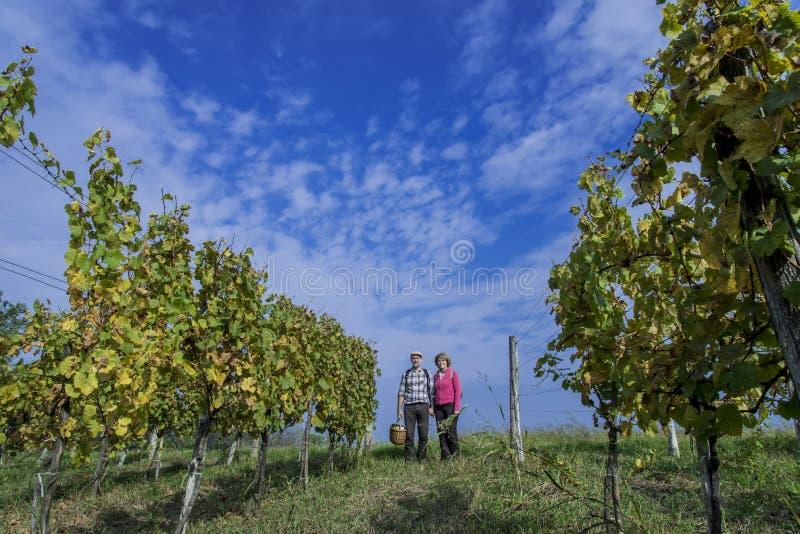 Höga par i vingården royaltyfri foto