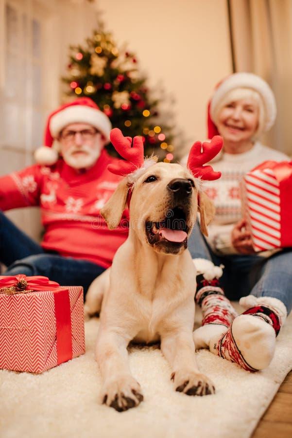 Höga par med gåvor och hunden royaltyfri bild