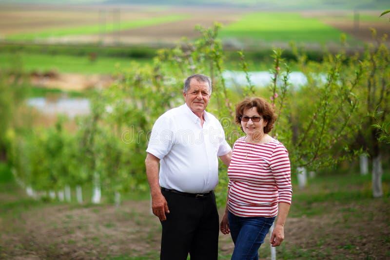Höga par som är utomhus- i fruktträdgård arkivbild