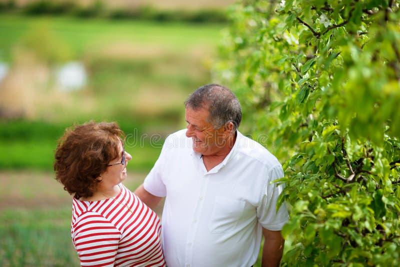 Höga par som är utomhus- i fruktträdgård arkivbilder