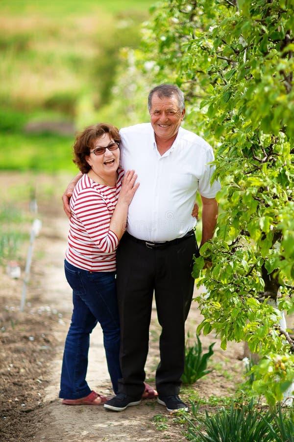 Höga par som är utomhus- i fruktträdgård royaltyfria bilder