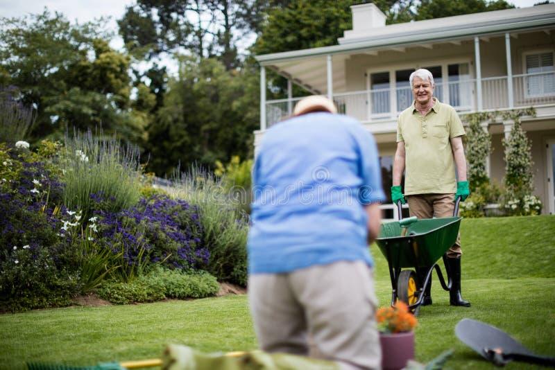 Höga par som arbeta i trädgården växten arkivfoton