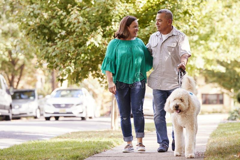 Höga par som går hunden längs den förorts- gatan fotografering för bildbyråer
