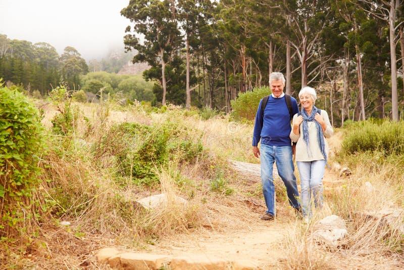 Höga par som går i en skog in mot kameran fotografering för bildbyråer