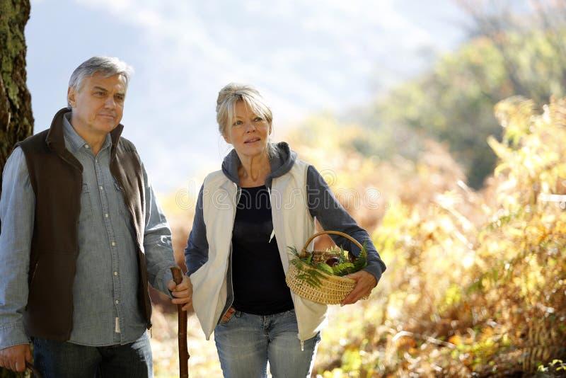 Höga par som går i skog arkivfoton