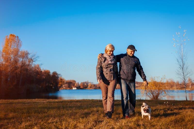 Höga par som går mopshunden i höst, parkerar vid floden Lycklig man och kvinna som tycker om tid med husdjuret royaltyfri fotografi