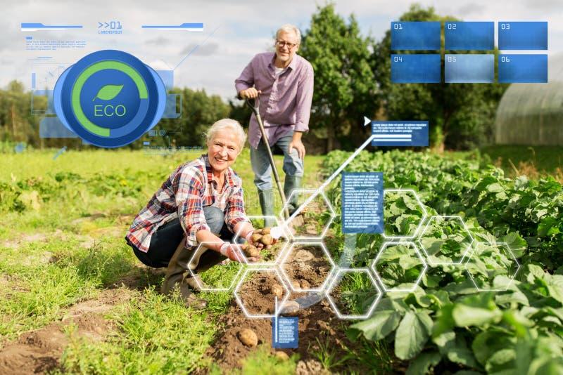 Höga par som planterar potatisar på trädgården eller lantgården arkivfoton