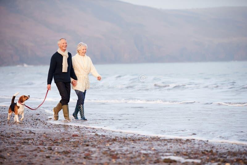 Höga par som promenerar vinterstranden med den älsklings- hunden royaltyfria bilder