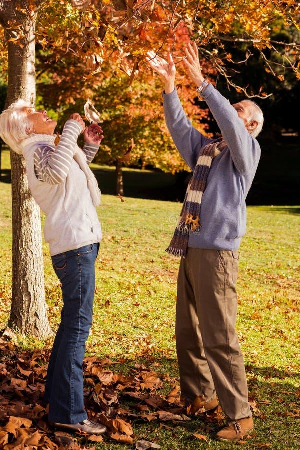 Höga par som söker efter något i ett träd arkivbild
