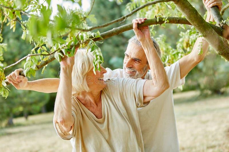 Höga par som skrattar under ett träd fotografering för bildbyråer