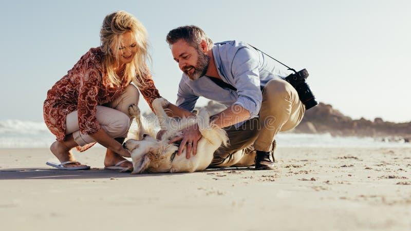 Höga par som spelar med hunden på stranden royaltyfria bilder