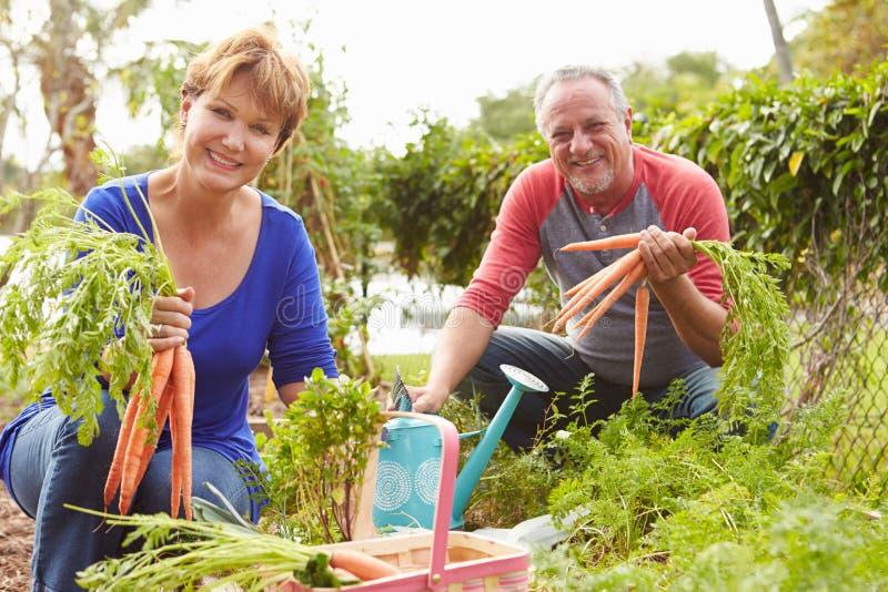 Höga par som tillsammans arbetar på odlingslott royaltyfri foto