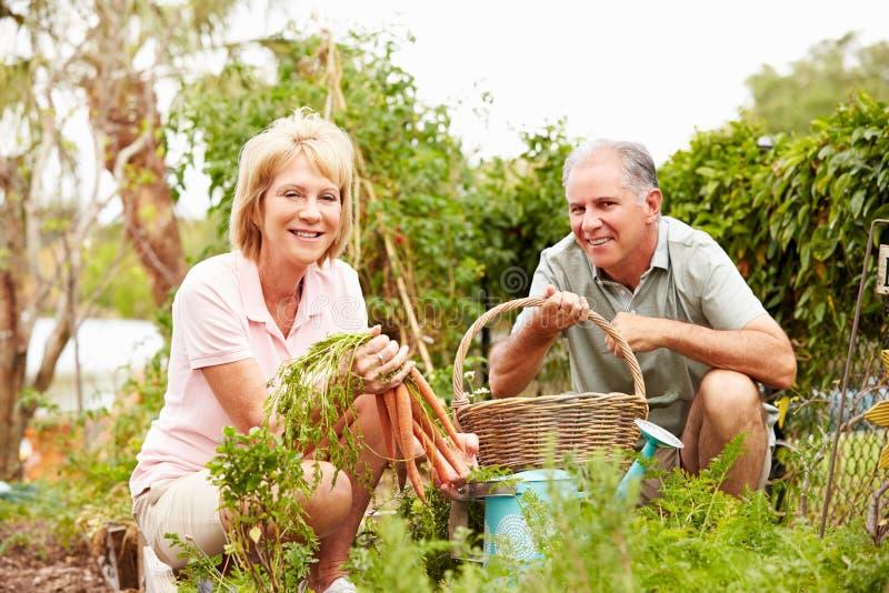 Höga par som tillsammans arbetar på odlingslott royaltyfri bild