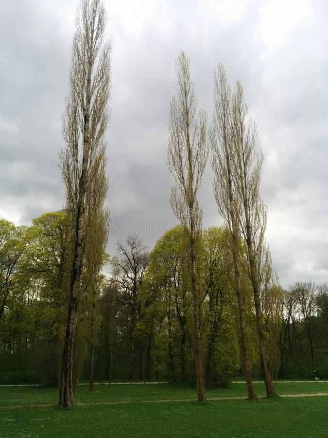 Höga träd i parkera och en molnig himmel royaltyfri foto