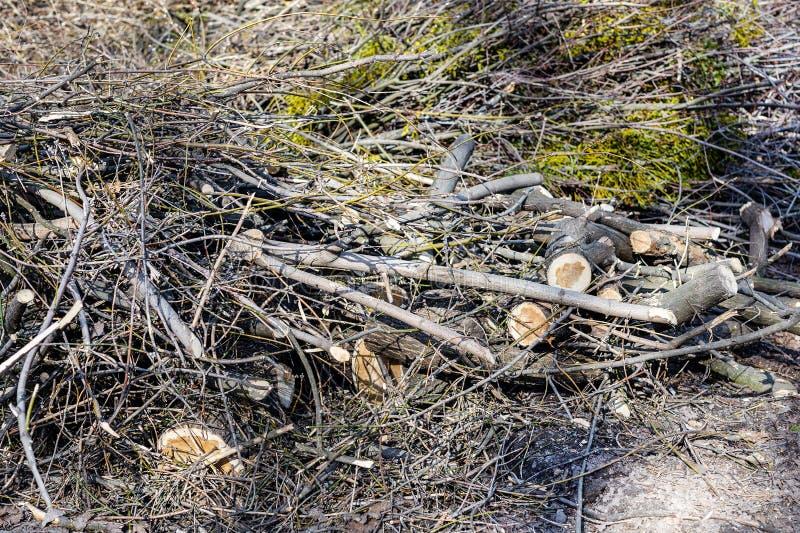 Högar av klippta trädfilialer i stad parkerar Sanitär skogsavverkning Hög av torr småskog och deadwood arkivbild