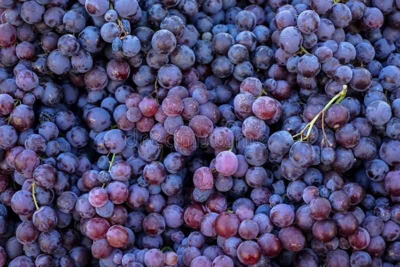 Högar av läcker ny saftig kärnfri bakgrund för röda druvor i stadsfruktmarknad arkivbild