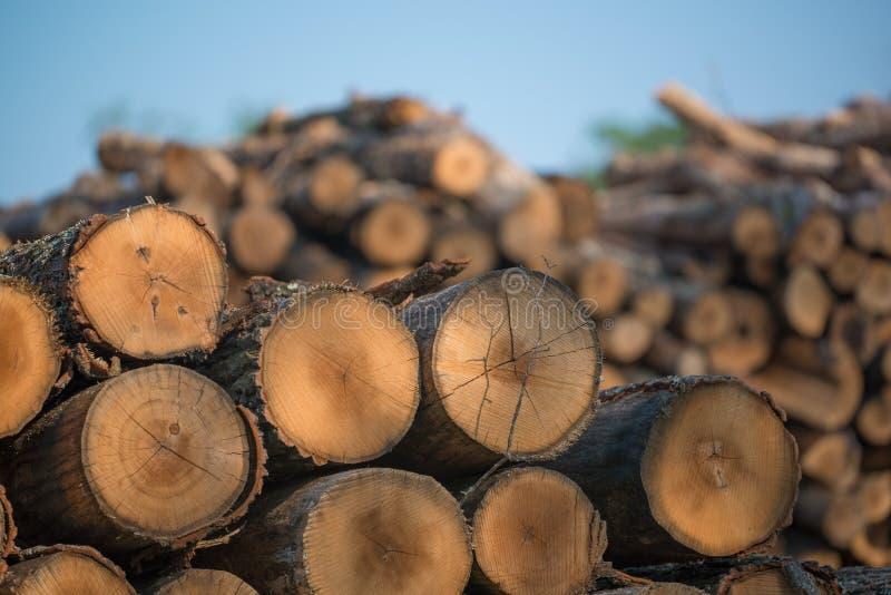 Högar av staplade loggade träd från regulatorn Knowles State Forest i nordliga Wisconsin - DNR har arbetande skogar som är harves royaltyfri fotografi