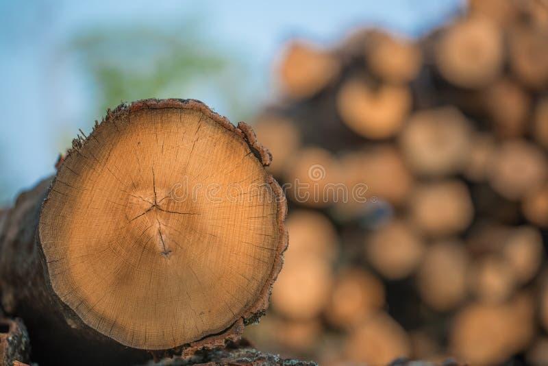 Högar av staplade loggade träd från regulatorn Knowles State Forest i nordliga Wisconsin - DNR har arbetande skogar som är harves arkivbilder