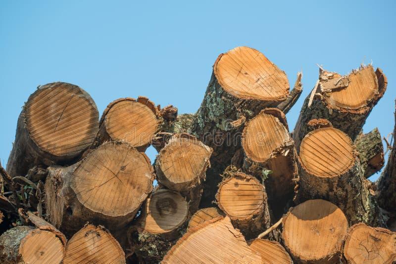 Högar av staplade loggade träd från regulatorn Knowles State Forest i nordliga Wisconsin - DNR har arbetande skogar som är harves arkivfoto