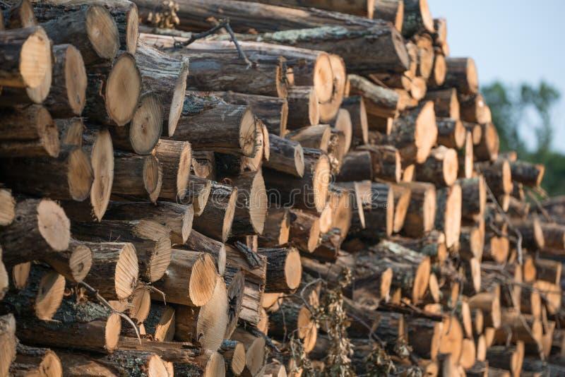 Högar av staplade loggade träd från regulatorn Knowles State Forest i nordliga Wisconsin - DNR har arbetande skogar som är harves royaltyfria foton