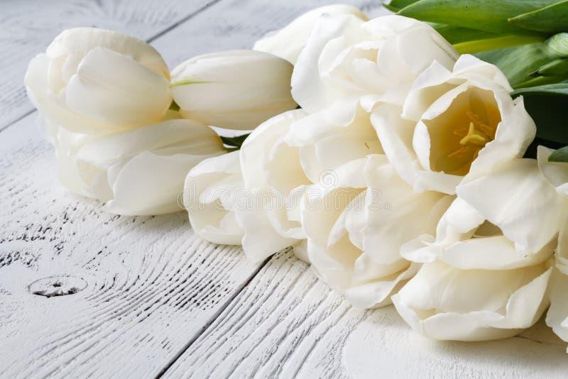 Högen av den vita våren blommar tulpan arkivfoto