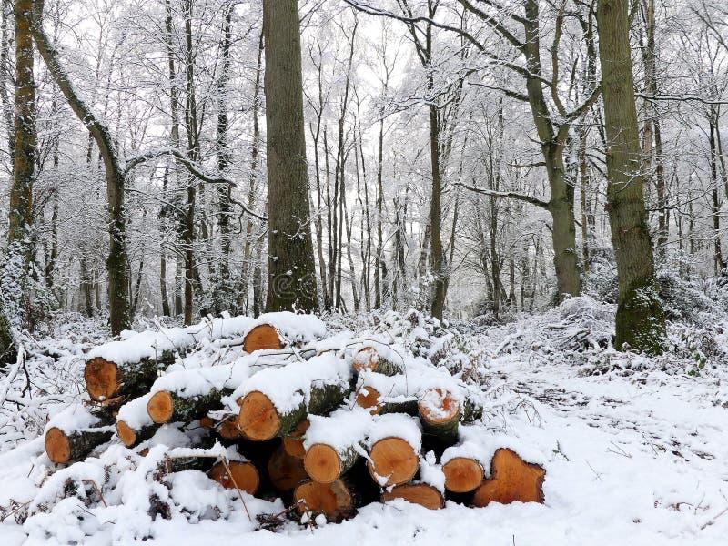 Högen av snö täckte journaler, den Chorleywood allmänningen, Hertfordshire arkivfoton