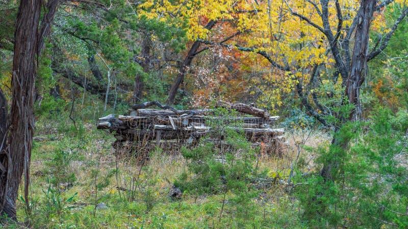 Högen av staplat upp loggar in en skog fotografering för bildbyråer